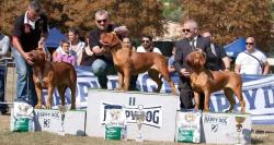 Fattrici Dogue de Bordeaux CH. ONLY YOU DELLE QUERCEROSSE